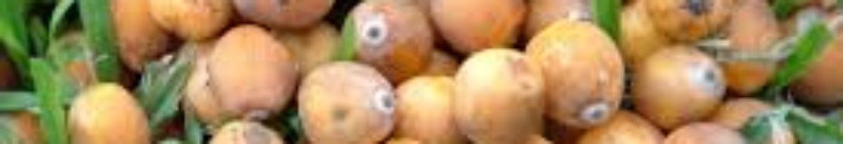 Jerivah – O doce da fruta está no seu paladar.